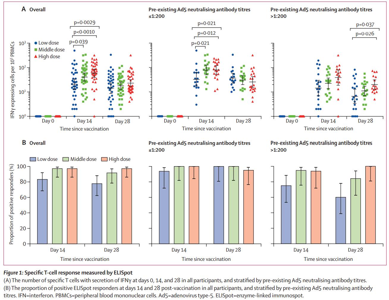 《柳叶刀》刊发中国新冠疫苗第Ⅰ阶段初步研究成果:证实安全性、有效性